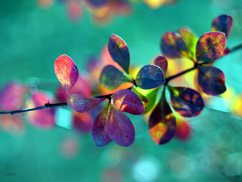 """Color fine art """