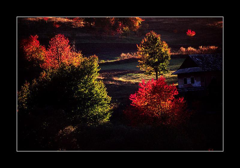 Color Light 1