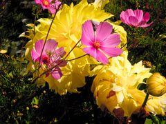 Colorati fiori