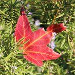 colore di autunno