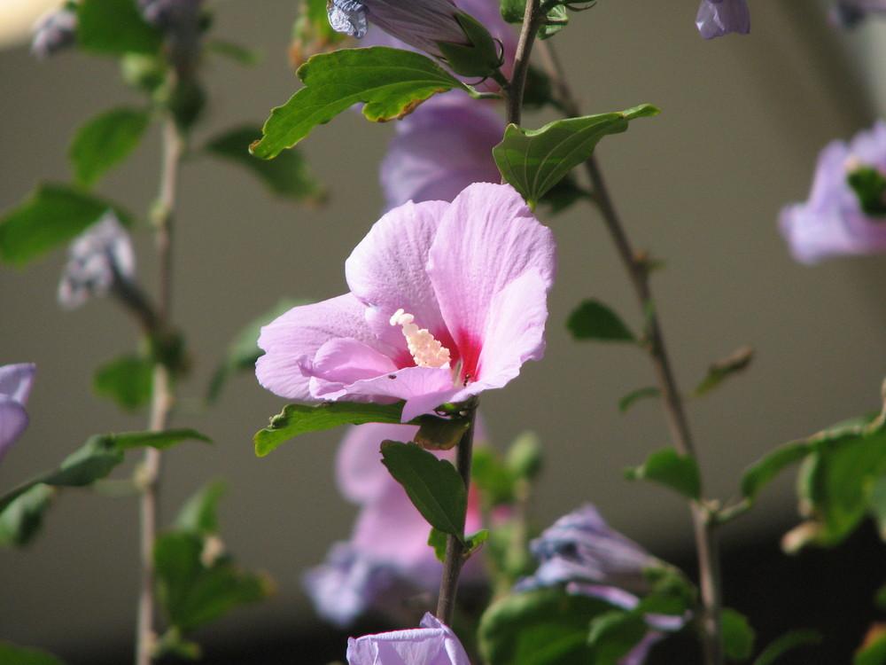 Colore di un fiore
