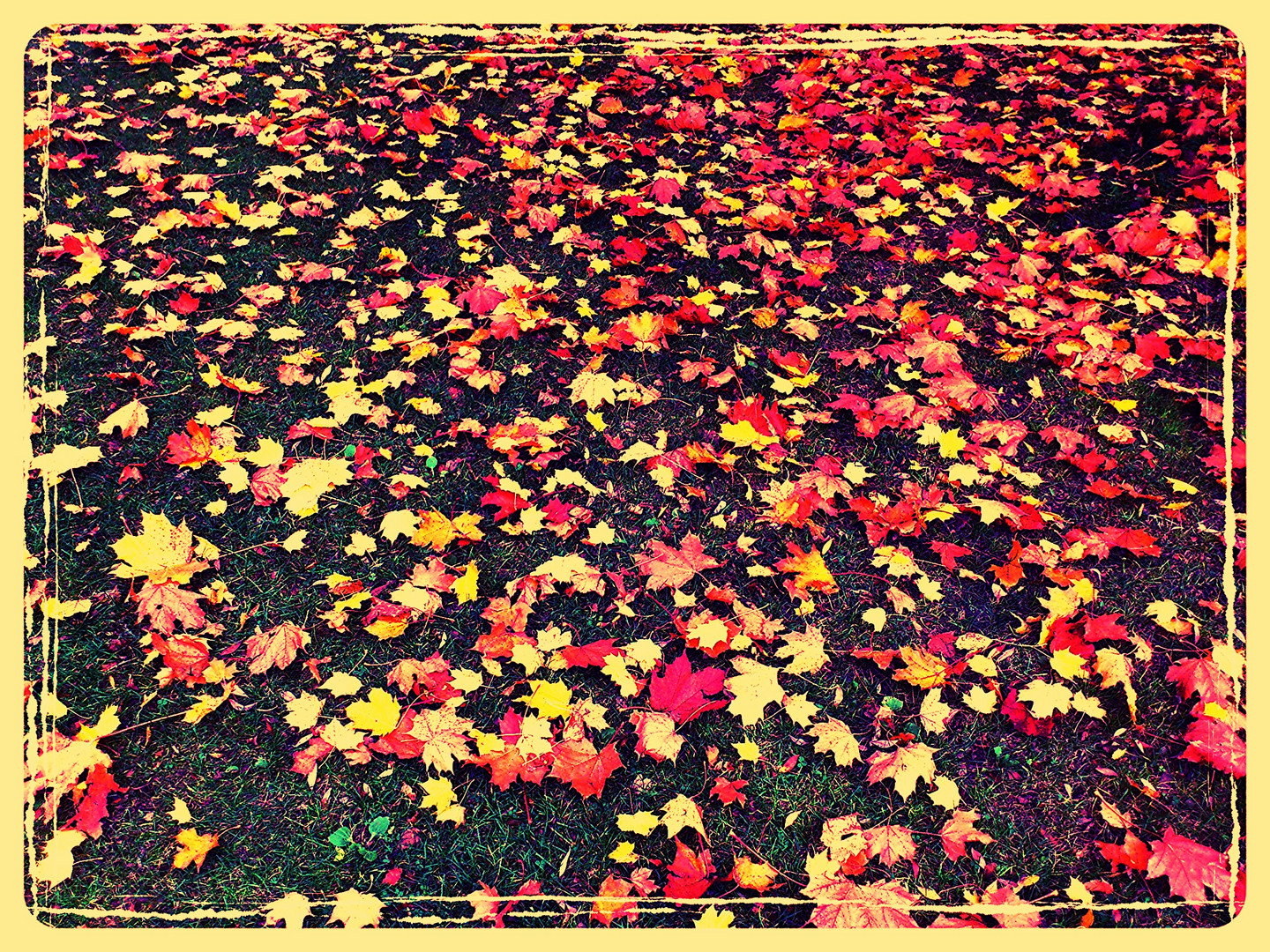 colored leafs