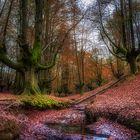 Colores de otoño...