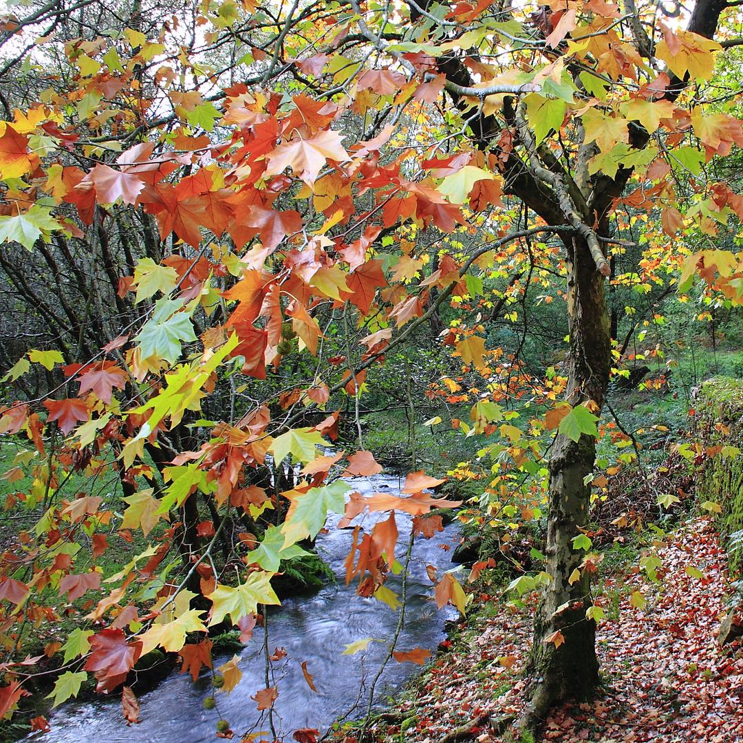 colores de otoño 3