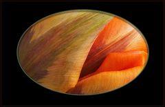 Colores  de un tulipan