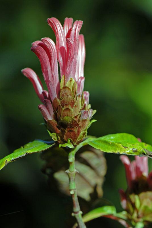 Colores de una flor