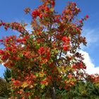 Colores del otoño en la montaña de León.