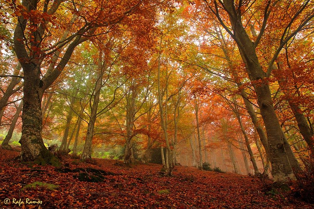 Colores en la niebla