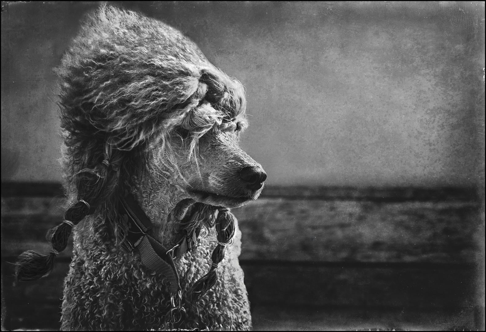 Colorfoto-Contest Tierportraits - Sturmfrisur