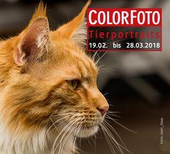 Colorfoto_Contest_Tierportraits