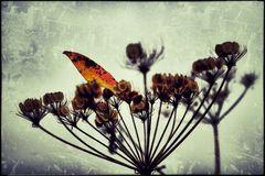 colorful autumn III
