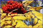 Colori d'autunno con bacche rosse