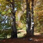 Colori d'autunno, le colonne d'Ercole naturali