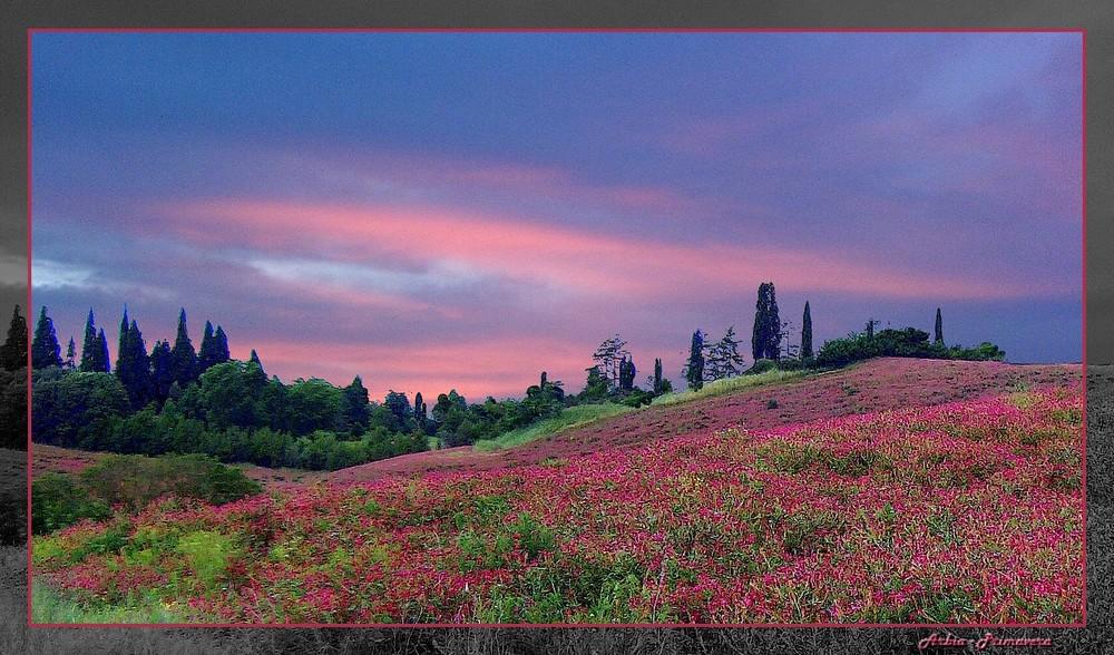 Colori di Toscana - Arbia