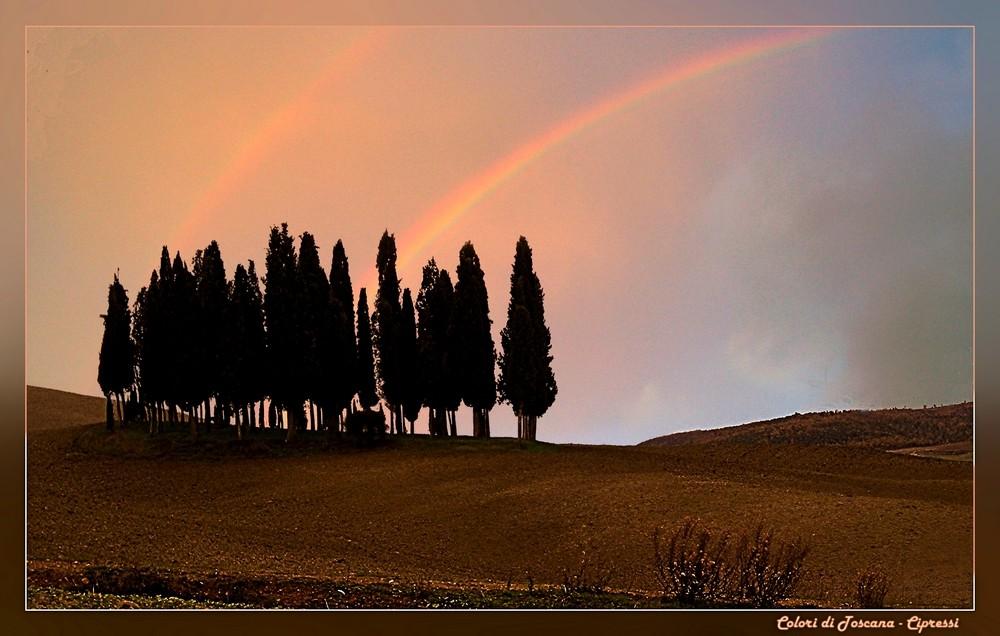 Colori di Toscana - Cipressi