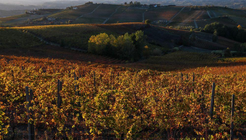 colori di-vini