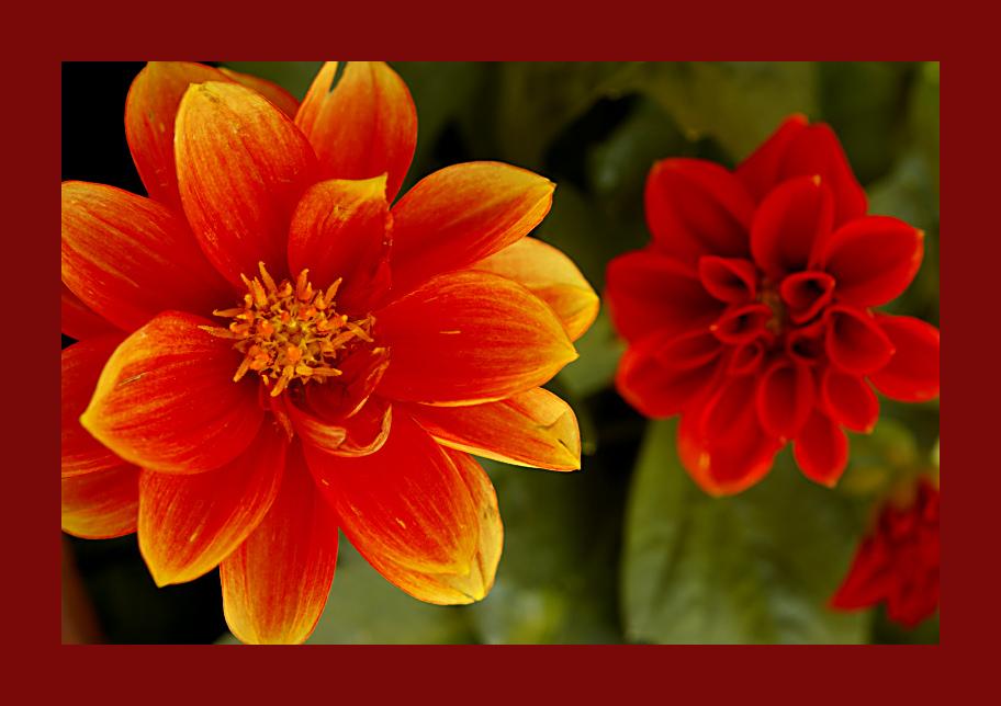 Colori in primavera