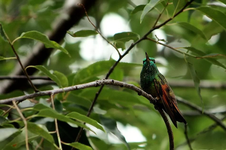 Colorido plumaje