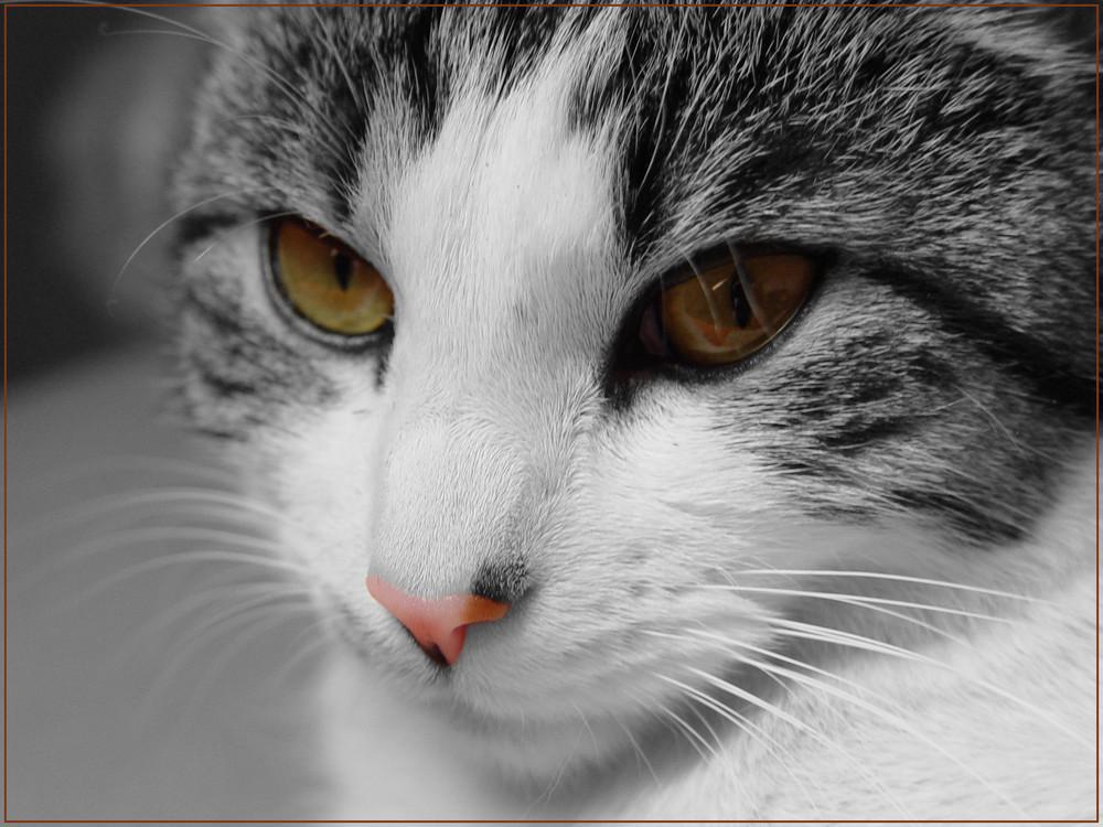 ColorKey-Cat