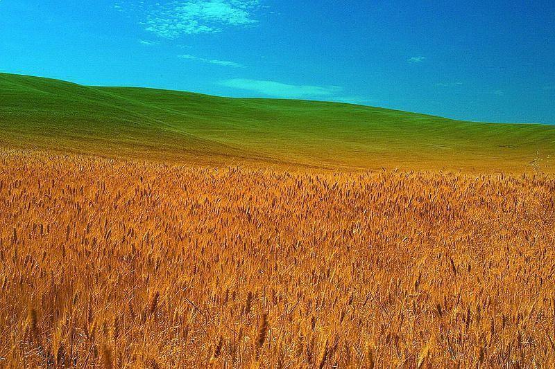 Colors Land