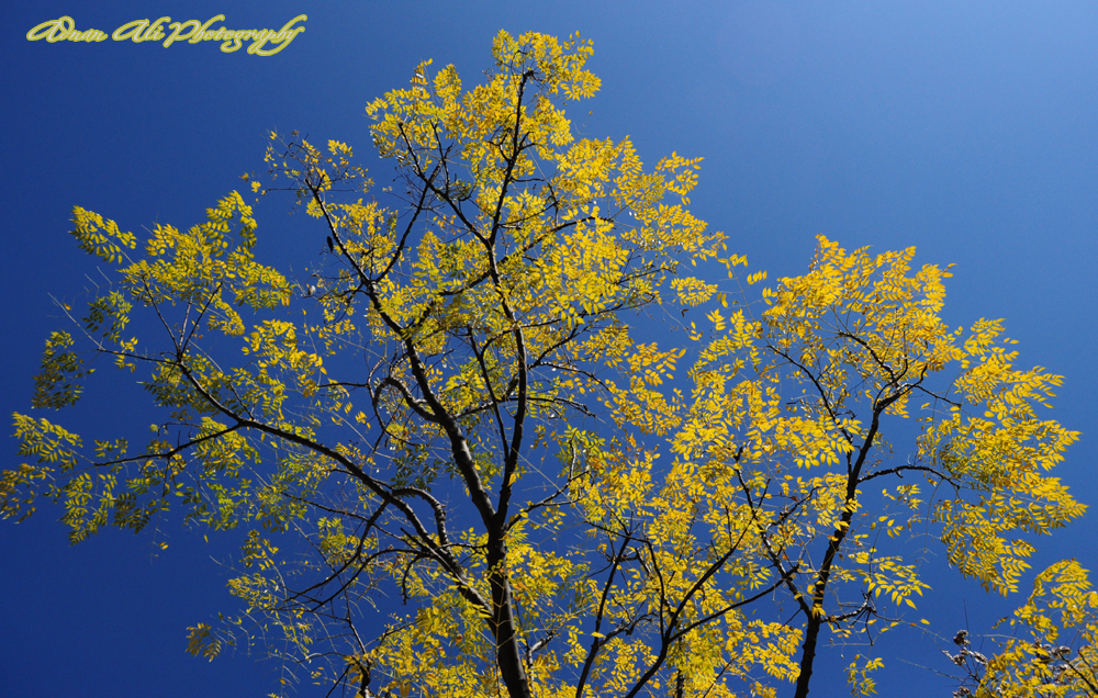Colors of Autumn Season