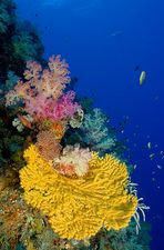 Colors of Nature II