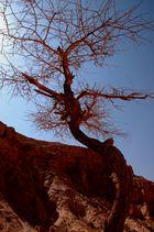 Colour Canyon (2)