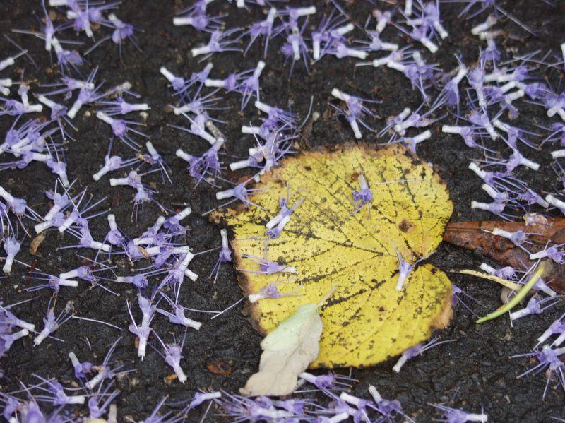 coloured autumn / no indian summer