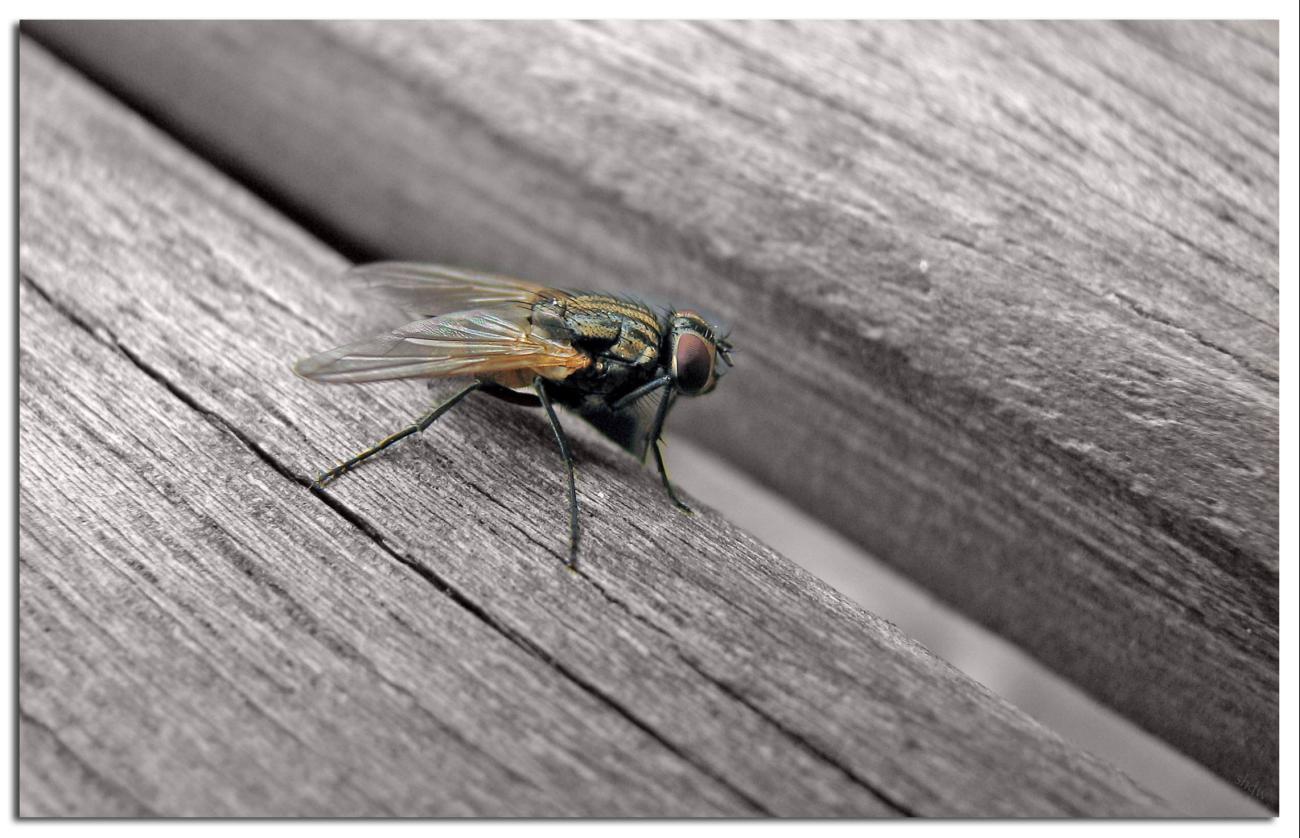 Coloured Fliege