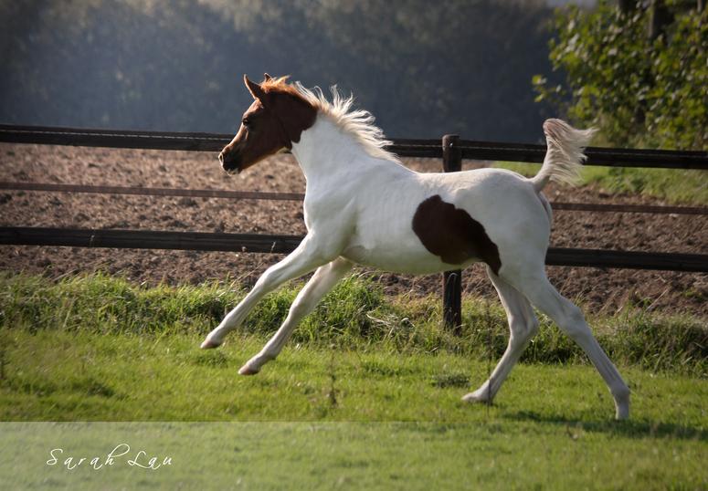 *Coloured*Foal*
