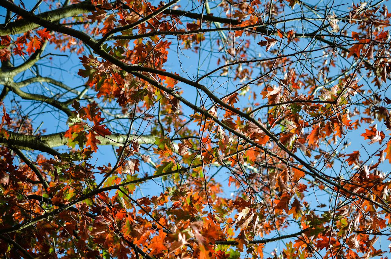 Colourful Autumn