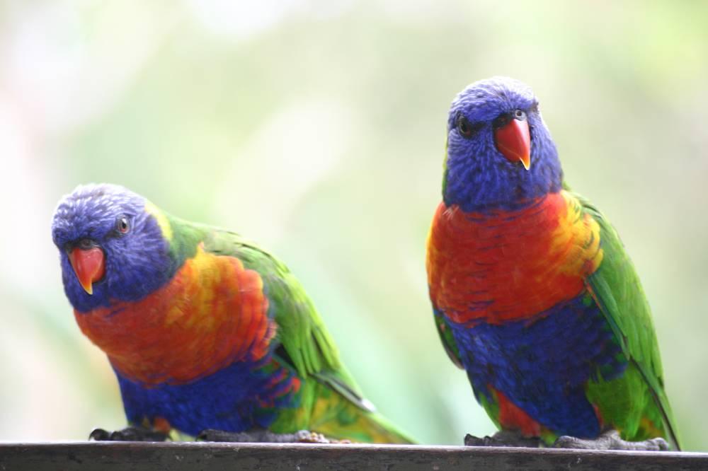 colourful couple