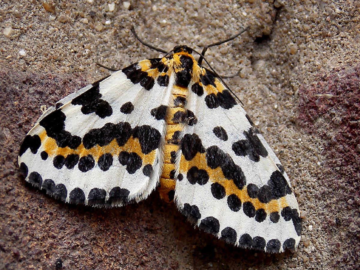Colourful Moth