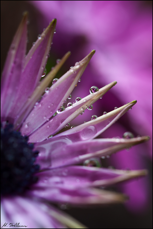 colours of a rainy day...