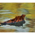 [  Colours of autumn  ]