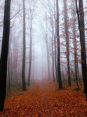 - colours of autumn -