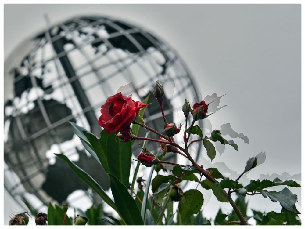 Colours of Duisburg 26 - Die Rose, die Welt und dahinter die Reihenhäuser