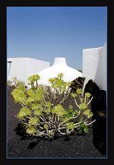 *** Colours of Lanzarote ***