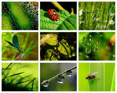 Colours of Nature - GREEN