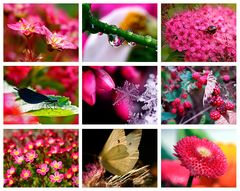Colours of Nature - PINK