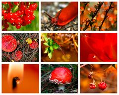 Colours of Nature - RED