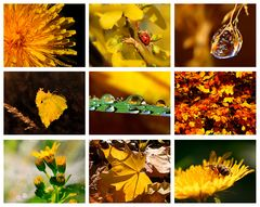 Colours of Nature - YELLOW