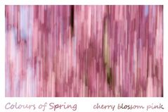 Colours of Spring - cherry blossom pink
