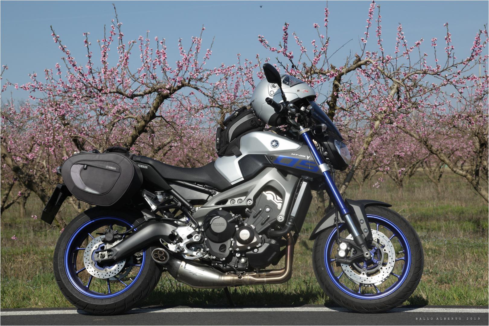 Combinazione speciale (Moto & Primavera)