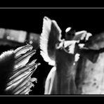 Come Angeli