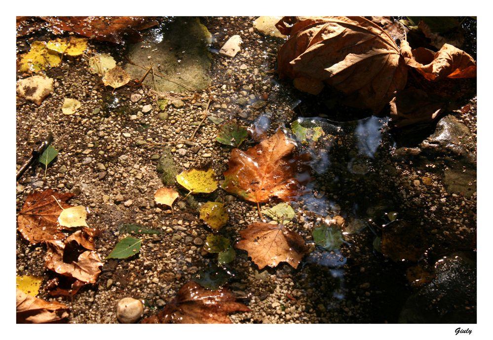 come foglie