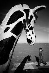 Come raggiungere pari altezza con una giraffa