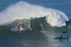 Comité d'accueil pour surfeur !