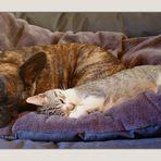 comme chien et chat!!