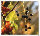 comment sera le vin cette année?